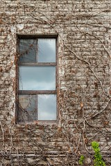 Window (Karen_Chappell) Tags: ottawa travel window architecture building bricks brick university ontario vines brown