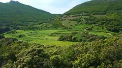 313 - Cap Corse, Rogliano, les moutons au pied des ruines du château Castellacciu San Columbanu (paspog) Tags: rogliano corse captcorse montagne mountain berg france mai may 2018 moutons sheep