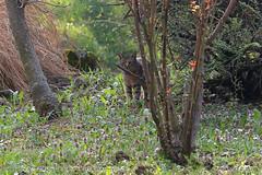 Spotter (srkirad) Tags: animal cat outdoor nature flora grass flowers trees travel hiking trekking excursion valjevo serbia