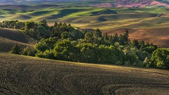 Palouse Farmland in Spring (Cole Chase Photography) Tags: palouse green color farmland spring washington pacificnorthwest