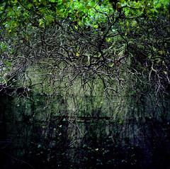 Deputy Pass | Kilmacurragh (Daire Quinlan) Tags: film kodak ektar 100 asa100 bronica sq sqa sqai 120 mediumformat mf 6x6 square 80mm s diy c41 colour fuji hunt kilmaccurragh bots botanic gardens deputy pass wicklow hill climb