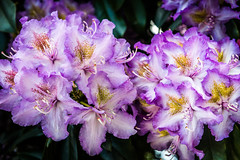 Flower (stephanrudolph) Tags: flower blossom d750 nikon handheld london europe england uk gb europa 2470mm 2470mmf28g 2470mmf28