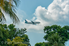 Singapore - June 3, 2018: Silk Air on Final Approach into Changi Airport (per.svensson@mac.com) Tags: changibeachpark aircraft airplane aeroplane fly airline air transportation silkair flight plane trip jet travel singapore turbine aviation tourism places airliner 2018 engine wing airbus final approach landing trees commercial june technology changi airport 320 modern business journey transport