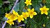 Rifugio Toesca - (17-06-18) 10 (Christian Perfumo) Tags: italia piemonte torino valdisusa natura escursione primavera primavera2018 2018 allaperto
