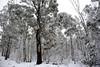 Brindabella Snow 0004 (BrianRope) Tags: brindabellas brindabellaroad cotterriver namadginationalpark snow brindabella nsw australia