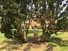 Friary Park - 08 (jovike) Tags: barnet espe finchley london nature park tree woman