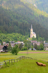 church and sheep (Wolfgang Binder) Tags: landscape scenery church grass fence village valley countryside sheep alps weissbriach carinthia nikon d7000 zeiss planar planart2100