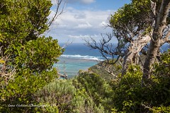 Lord Howe Island (Anna Calvert Photography) Tags: australia lordhoweisland adventure island landscape nature outdoors scenery sunrise beach lordhowe rocks surf dawn water thelagoon