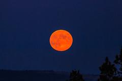 4P5C5481.jpg (Murray Foubister) Tags: moon autumn night usa california 2013 travel lighteffects
