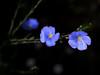Swaying (murozo) Tags: flower green garden 花 草 庭