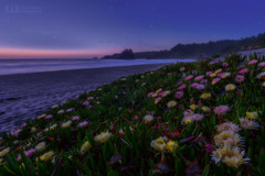 Stars, Waves and Blossoms (Konejita) Tags: california californiacoast norhterncalifornia trinidad trinidadstatebeach pacificcoast stars longexposure flowers westcoast nikon d600 1635mm christinaangquico