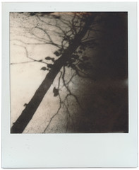polaroid1780 (www.cjo.info) Tags: 600 600bw england europe europeanunion integral london polaroid polaroidoriginals polaroidslr680 southbank tatemodern unitedkingdom westerneurope analogue film flora pavement plant shadow tree urban