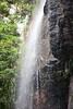 Australia_2018-176.jpg (emmachachere) Tags: subtropical trees hike waterfall boatride springbrook australia rainforest kanagroo animals koala brisbane boat lonepinekoalasanctuary