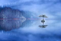 'The Lady of the Lake' - Vancouver Island (Gavin Hardcastle - Fototripper) Tags: fairy tree lake port renfrew vancouverisland mist fog winter cold gavinhardcastle fototripper