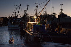 Trawler in the Gong (Mikey Down Under) Tags: australia wollongong nsw southcoast sunset evening pelican night dark fishing trawler f28 harbour birds