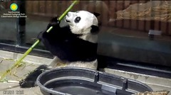 2018_06-10t (gkoo19681) Tags: beibei chubbycubby fuzzywuzzy adorableears brighteyed feetsies toofers favoritetub boodinner sohandsome precious darling amazing toocute contentment majestic royalty comfy meltinghearts cooldude ccncby nationalzoo