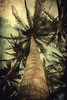 Looking up (vittorio.chiampan) Tags: trees palms fineart art