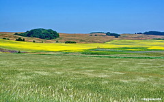Landschaftspanorama (garzer06) Tags: himmel deutschland gelb blau mönchgut landschaft senf baum hügel landschaftsbild groszicker naturephoto landschaftsfoto naturphotography inselrügen mecklenburgvorpommern landscapephotography naturfoto insel naturfotografie hügellandschaft landschaftsfotografie