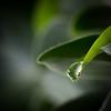 Drop dans la savane... (ju.labs) Tags: waterdrop drop macro macroinnature 100mmf28macro macroshot 6dmii vert green light lumière explorer