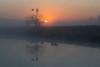 Daybreak || Richmond Lowlands || Sydney (David Marriott - Sydney) Tags: richmondlowlands newsouthwales australia au sunrise daybreak sun rise fog reflection nsw sydney windmill tree pond dam cow cattle