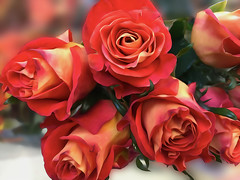 Ownerless........ (denise.bardauil) Tags: rosa bouquet flores