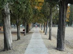 SANTA ANITA. (ParuArt) Tags: santaanita entrerios litoral mesopotamia plaza arboles bicicleta argentina camino xd