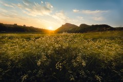 Salisbury Crags (Flower of the day) (Uillihans Dias) Tags: sunset nature d750 nikon landscape queensdrive holyroodpark edinburgh scotland unitedkingdom gb