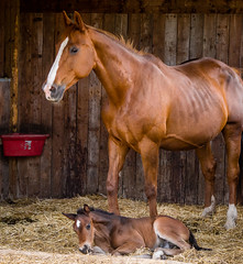The New Arrival (Dex Horton Photography) Tags: armstrong bc canada claudia foal horses mare mama