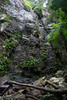 Australia_2018-215.jpg (emmachachere) Tags: subtropical trees hike waterfall boatride springbrook australia rainforest kanagroo animals koala brisbane boat lonepinekoalasanctuary
