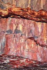 Petrified Wood (dorameulman) Tags: dorameulman petrifiedforest petrifiedwood arizona macro details wood canon7dmark11 texture