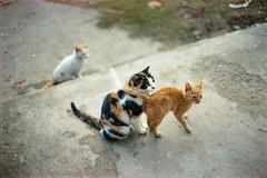 (Just A Stray Cat) Tags: kodak portra 400 stray cat cats kitty kittens gato feline felines 35 mm 35mm film analog analogue