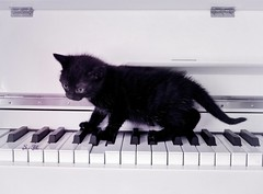 Piano Kitty (pianocats16) Tags: black kitten kitty cat cute tiny baby piano white keys