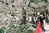 A selfie with sakura (しまむー) Tags: minolta himatic e rokkor 40mm f17 fuji pro400h 400 hirosaki sakura 弘前 桜