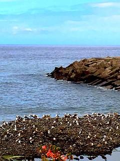 Madeira, Portugal. Ocean Coast