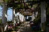 nature in Villa San Michele (moniq84) Tags: nature flower flowers villa san michele capri anacapri italia italy amalfi coast sunny day