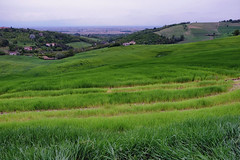Primo maggio in Monferrato (STE) Tags: monferrato