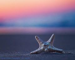 Sunset Starfish (mojomoni- Cocoa Bean Photo) Tags: beachphotographer cocoabeanphoto vabeach virginiabeach monicamartin peaceful sandbridgebeach sandbridge bestofthebeach beachlife ocean starfish sunset beach