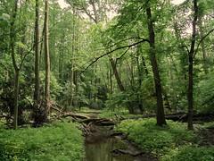 Forest (Jurek.P) Tags: forest lasekbielański las warsaw warszawa poland polska jurekp samsungwb650