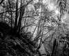 Blue Mountains (Bill Thoo) Tags: katoomba bluemountains nsw australia newsouthwales landscape travel nature trees forest woods bush bushland nationalpark monochrome bnw blackenedwhite blackandwhite longexposure analog film analogphotography filmphotography mediumformat mediumformatfilm mediumformatfilmphotography pentax pentax6x7 6x7 55mm fujifilm acros acros100
