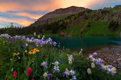 Field of Wildfowers in Colorado (NickSouvall) Tags: colorado wildflowers wild flowers flower field columbine paintbrush daisy blue lake rocky shore clear sunset light warm color san juan mountain hike backpack trip