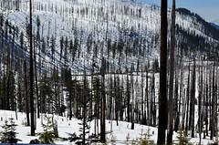 Hoodoo (Sotosoroto) Tags: cascades oregon mountains santiampass santiamhighway snow forestfire bbcomplex ghostforest