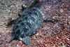 Turtle 11 (Petter Thorden) Tags: diving indonesia gili trawangan underwater turtle