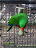 Parrot - Tropical Butterfly House Wildlife And Falconry Centre 2018 (Dave_Johnson) Tags: tropicalbutterflyhousewildlifeandfalconrycentre tropicalbutterflyhouse wildlifepark park centre butterflyhouse anston northanston sheffield southyorkshire animal animals parrot parrots bird birds