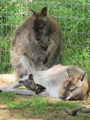 IMG_0209 (duncansmith50) Tags: yorkshirewildlifepark lions polar bears black rhino tigers giraffes doncaster