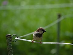 P1100400 (Jasardpu) Tags: zoo karlsruhe vogel tier animal bird