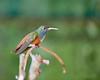 Colibrì (Christian Papagni | Photography) Tags: oasi sant alessio canon eos 5d mark iv ef 100mm f28l macro is usm hummingbird