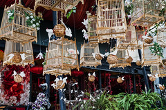 Bird Cages in the Streets of Chiang Mai Old City (dean.white) Tags: thailand th northernthailand chiangmai changwatchiangmai oldcity chiangmaioldcity birds birdcages canoneos6d canonef24105mmf4lisusm