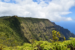 DSC33_18282 (heartinhawaii) Tags: kokee kokeepark kauai hawaii mountains forest hike hiking view lush green reddirt trees tropical landscape nature nikond3300 kalalau napalicoast
