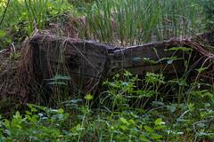 Growing grass (Pernilla Lindblom) Tags: summer sverige vandring sörmlandsleden nature trekking sweden vandra eka hiking natur sommar