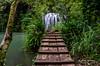 La passarel·la i el salt (josep manresa) Tags: water fall green river tree runway arbol pasarela cascada rio